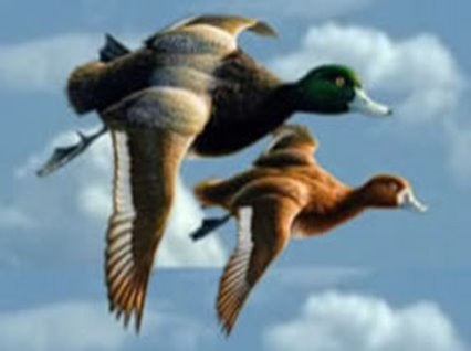 Duck Flying